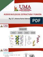los aminoclucosidos