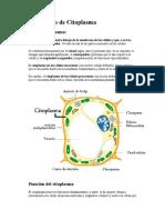 El Citoplasma