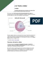 el núcleo celular.pdf