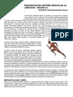 Adaptaciones Fisiolgicas Del Sistema Muscular