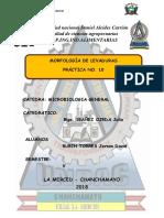 Informe de Levaduras