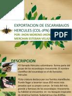 Exportacion de escarabajos