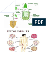 tejidos musculares