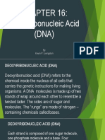 Chapter 16- Dna