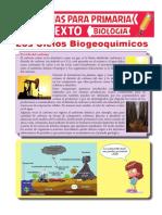 Ciclos Biogeoquímicos Para Sexto de Primaria