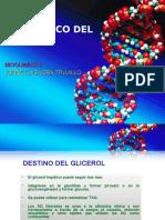 DESTINO METABÓLICO DEL GLICEROL.pptx
