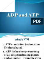 ATP-ADP-CYCLE.pptx