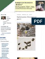 Hyphomycetes