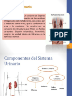 anatomayfisiologadelsistemaurinario-140623101839-phpapp01.pdf