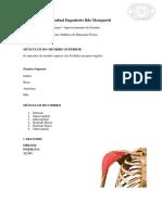 Anatomia. Membros Superiores