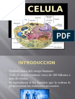 EQUIPO-3-CELULA.pptx