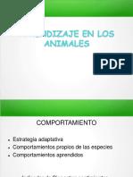 Aprendizaje en Animales