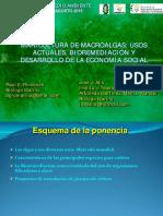 usos de algas en la industria