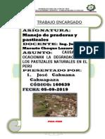 CAUASAS DE LA DEGRADACION.docx