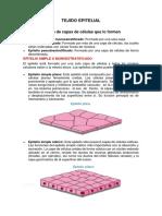 TEJIDO EPITELIAL INFO EXPO.docx