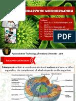 12. Eukaryotic Microorganism