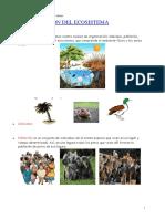 Organización Del Ecosistema