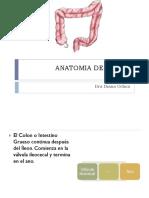 Anatomia de Colon