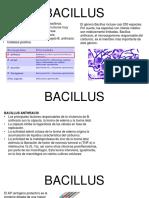 Bacillus Cory Ultimo