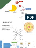 BIOSINTESIS DEL GRUPO HEMOPROTEINA.pptx