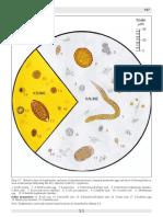 Parasite Size in Microscopy