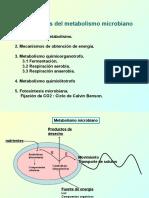 Lección 7. Metabolismo (Grupo B)