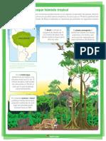 c6 Estructura Del Bosque Húmedo Tropical.
