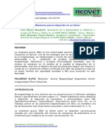 Megaesófago por Miastenia gravis adquirida en un bóxer.pdf
