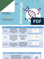Cuadro Comparativo Sobre La Estructura y Función de Las Células Del Sistema Nervioso