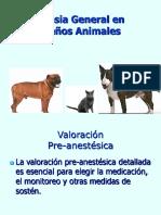 Anestesia en Animamales Domesticos