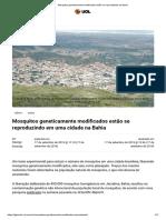 Mosquitos geneticamente modificados estão se reproduzindo na Bahia