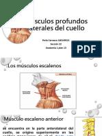 Músculos profundos del cuello