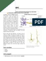 Dendrite_(biologia)