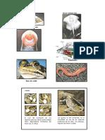 1º Lamina Peces,Anfibio y Reptil