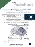 About the Brain Factsheet