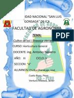 Informe-frejol.docx
