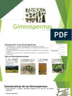 7. Gimnosperma