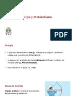 4. Energia y Metabolismo