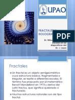 2.Fractales y Holografia