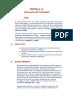 Informe N° 06 Conservacion de Flor Cortada.docx