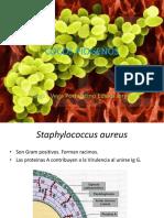 8-COCOS-PIOGENOS-MICOBACTERIAS-Y-ITS.pptx