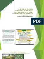 Bacterias y Hongos Hidrocarbonoclastas de Rizosfera Frijol y