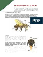 APICULTURA.docx