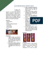 Extracción de ADN de Fresas Poster