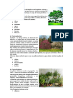 Caracteristicas de Plantas en Ingles y Español