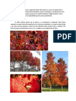 Especies de árboles a proponer.docx