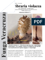 Cribraria violacea FUNGA VERACRUZANA 181