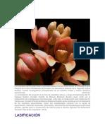 Historia de Las Orquideas en El Ecuador