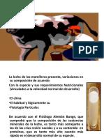 C LA LECHE.pdf