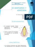 Tejidos Dentarios y Adhesion